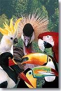 La londe les maures provence web - Jardin des oiseaux la londe ...