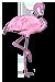 Flamant rose de Camrgue