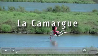 Camargue video