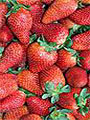 Strawberry Festival in Velleron