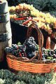 Grape harvest festivals
