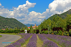 Digne les Bains, lavender and bell-tower