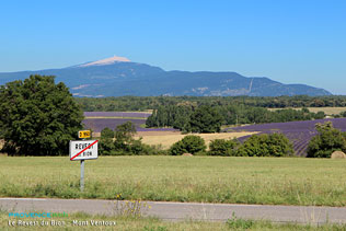 Revest du Bion, view on the Mont Ventoux. High definition photographs