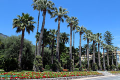 Beaulieu sur Mer, palm trees
