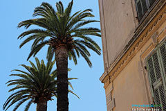 La Colle sur Loup, palm trees