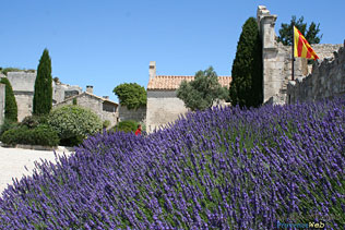 Baux de Provence, 37 HQ Photographs