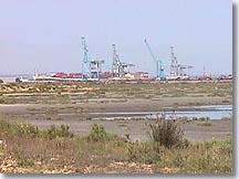 Port Saint Louis du Rhône, marais