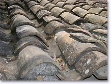 Chamaret, roof with typical tiles