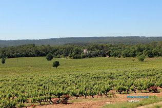 Lorgues, vignoble
