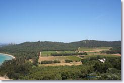 Porquerolles - Courtade vineyard