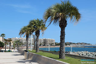 Saint Raphael - Palm trees