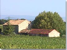 Saint Hippolyte le Graveyron - Vineyards